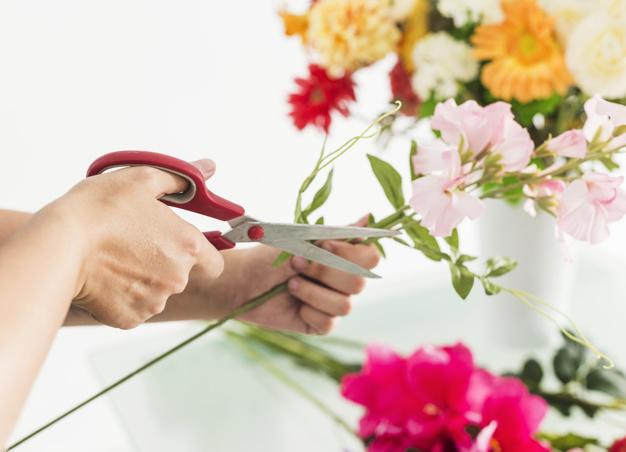 fresh flower cut