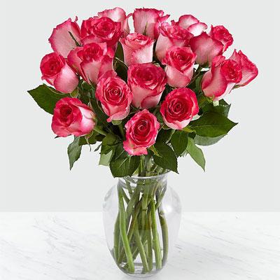20 pink milkshake rose in vase