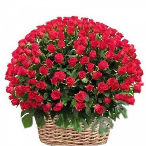 100 red rose basket