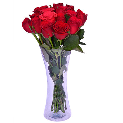 Real rose in vase