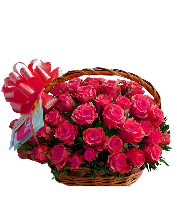50 pink rose